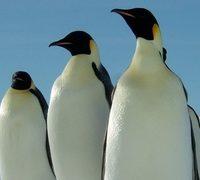 Googleのペンギンアップデート