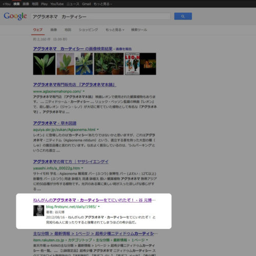 アグラオネマ・カーティシーのGoogle検索結果